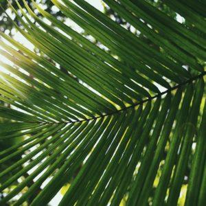 Palmsonntag, den 05. April 2020